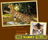 Scam - Kathy Hunter of Sierra Godl Bengals Cattery