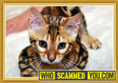 Scam - Kathy Hunter of Sierra Gold Bengal Cattery