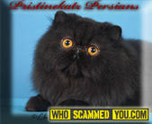 Scam - Christina Flores of Pristine Katz Cattery
